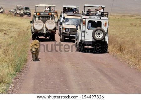 NGORONGORO TANZANIA - OCTOBER 22: Picture of some tourists in a car looking a lion during a typical day of a safari on October 22, 2010 in Ngorongoro crater Tamzania