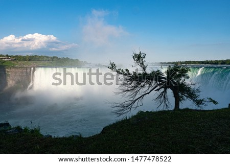 Niagara Falls, a tree on the background of the horseshoe fall. a view from the Canadian side