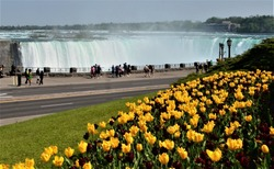 Niagara Falls and Spring season's bed of tulips