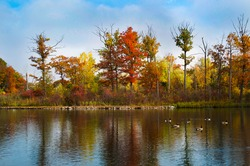 Niagara region Dufferin Islands with geese on a pond with bright fall colors in autumn season trees Canadian scene Niagara park