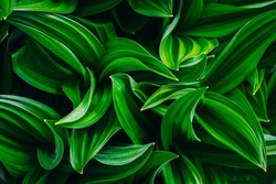 nice and textural,green and clean plant leaves