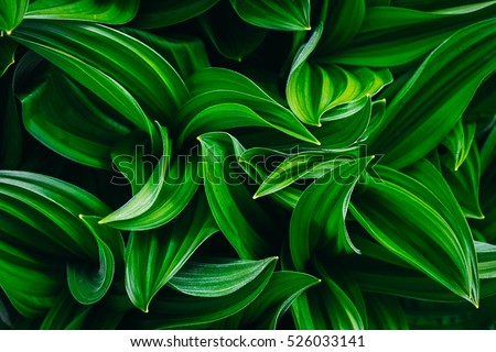 nice and textural,green and clean plant leaves #526033141