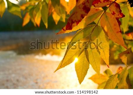 Nice autumn leafage - stock photo