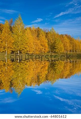 Nice autumn scene near water