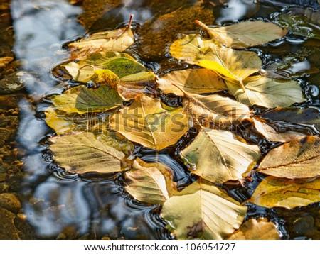Nice autumn stream