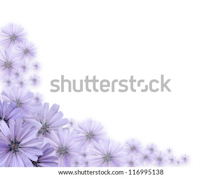 Nice border made from beautiful violet daisy flowers