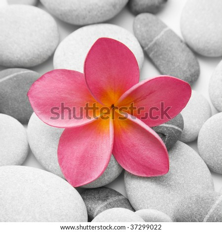 Nice calm image of beach pebbles with a single pink frangipani flower