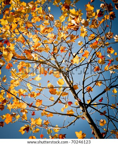nice colorful leafs on the beautiful blue sky