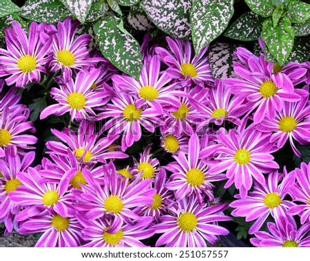 Nice Compilation of Pink Flowers as the nice background