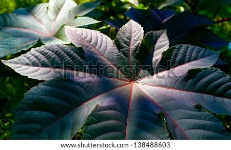 nice dark leafs in garden