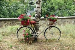 nice decorated bike on a birch tree
