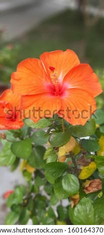 nice flower with nice area.