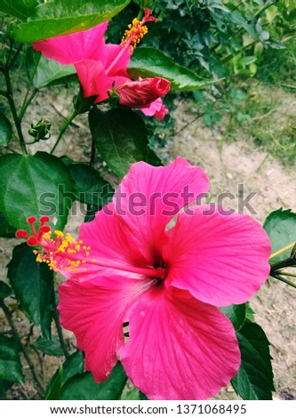 nice flowers  #1371068495