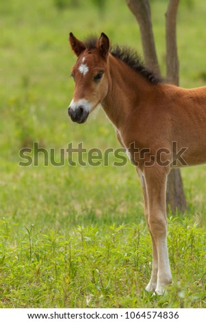 Nice foal on the meadow in springtime