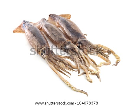 nice fresh squid isolated on white background