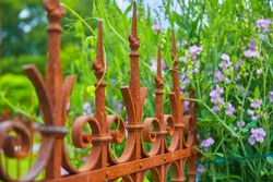 Nice garden decoration with fence and flowers, (broadleaf pea)