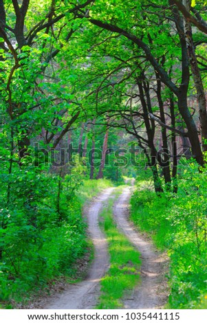 nice green forest and rut road #1035441115