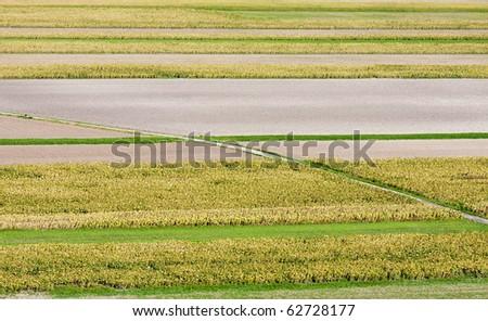 Nice interesting green field pattern