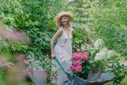 Nice lady a beautiful gardener joyfully drives a wheelbarrow loaded with garden equipment and flower pots with hydrangea seedlings