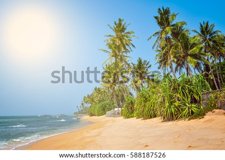 nice landscape with the ocean and palm trees #588187526