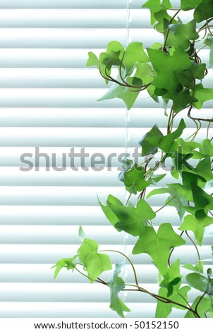 Nice long green ive on background with closed metal blinds
