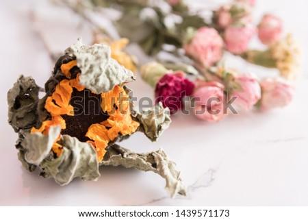 Nice looking beautiful dried flowers
