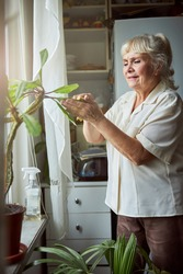 Nice old lady standing by the window and removing dust from houseplant laves with soft cloth while