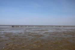 Nice panoramic view of the sea with a blue sky. Photo was taken during low tide with a brilliant blue sky.