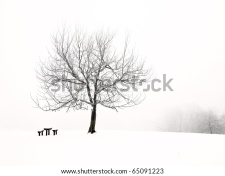 Nice park in winter with snowfall
