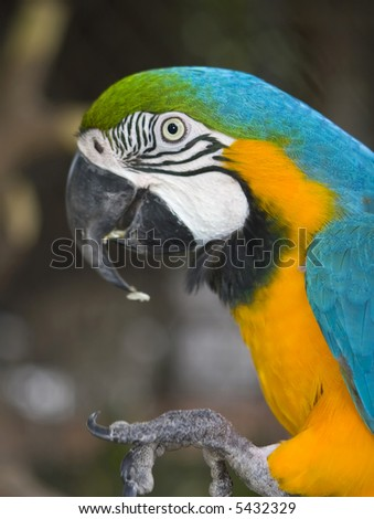 Nice parrot with many colors