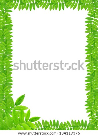 Nice picture frame made from freshness green leaves