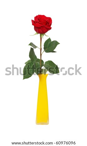Nice red rose in yellow ceramic vase isolated on white background with clipping path