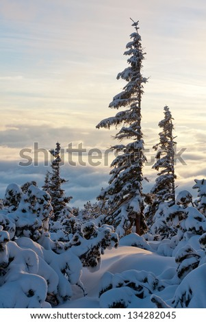 nice scene in winter mountains in Slovakia