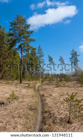 Nice scene with pathway in forest
