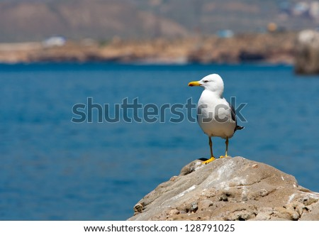 Nice seagull on stone on sea