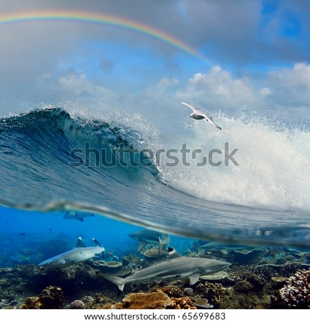 nice seascape with cloudy sky and rainbow with surfing ocean wave swirl white seagull flying above and four reef sharks underwater over coral reef