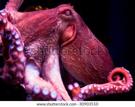 Nice smiling octopus deep under water