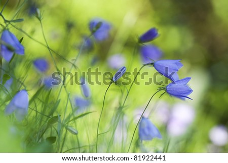 Nice summer meadow with harebells, shallow depth of field with focus on one of the harebells