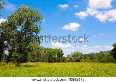 Nice summer scene in steppe
