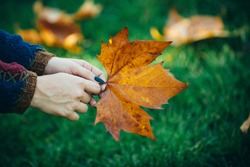 Nice sunny weather. Female hand with yellow leave. Young woman with beautiful autumn leave. Autumn yellow leave in the girls hand. Holding a yellow autumn leave in hand in the forest