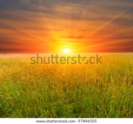 Nice sunset over field in steppe