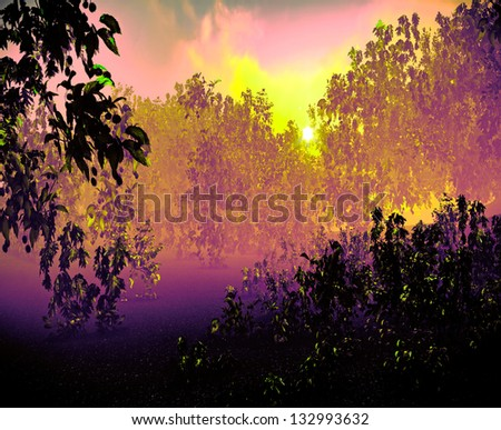 Nice sunset over forested  land