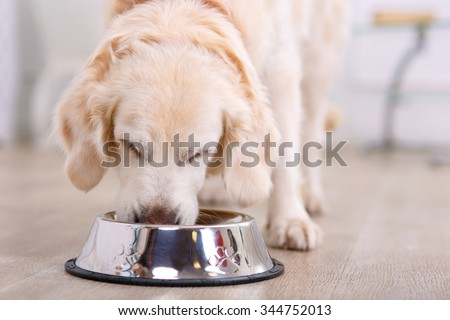 Photo of  Nice taste.  Close up of beautiful dog eating from the bowl