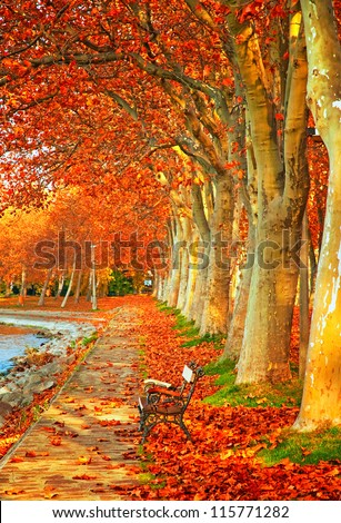 Nice trees in autumn in the city