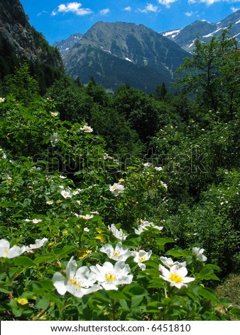 Nice view of flowers and mountains at the Pyrenees, Spain