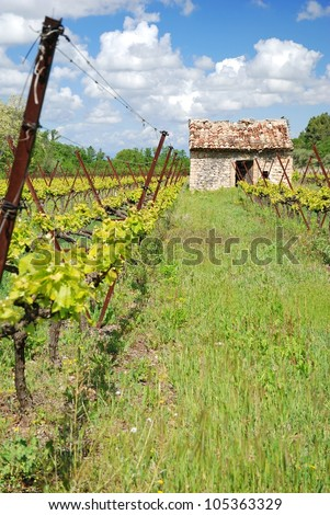 nice view of winegrowing in France Alsace