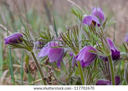 nice violet flowers