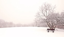 Nice winter photo with bench