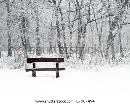 Nice winter photo with snow