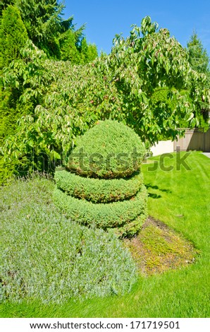 Nicely trimmed bushes in front of the house, front yard. Landscape design.